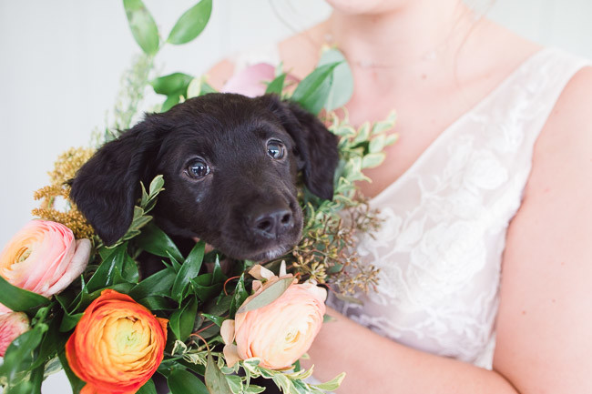 The-Farm-At-Woodend-Springs-Unleashed-Pet-Rescue-Wedding-34