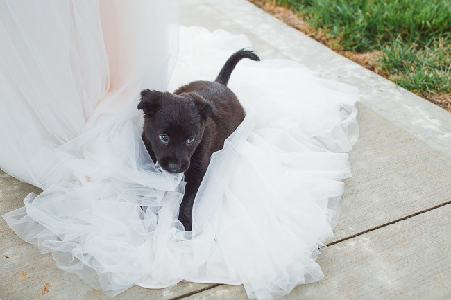 The-Farm-At-Woodend-Springs-Unleashed-Pet-Rescue-Wedding-47