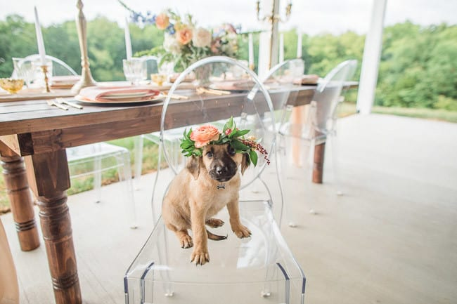 The-Farm-At-Woodend-Springs-Unleashed-Pet-Rescue-Wedding-53