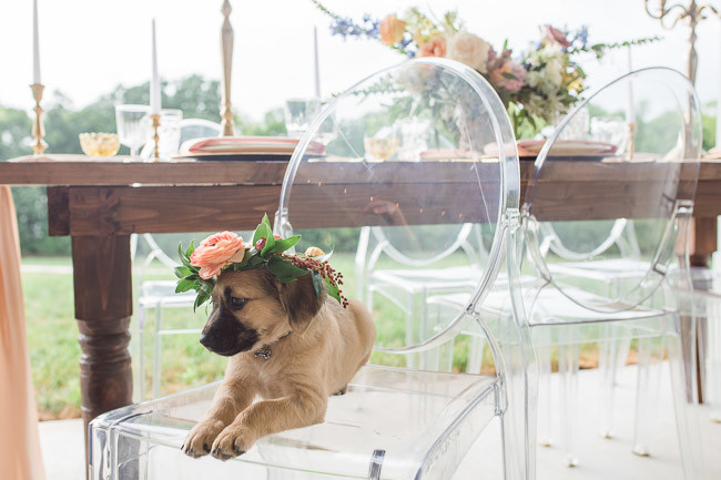 The-Farm-At-Woodend-Springs-Unleashed-Pet-Rescue-Wedding-54