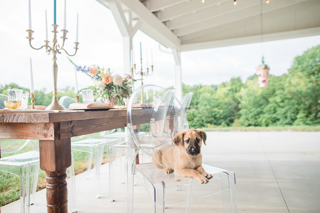The-Farm-At-Woodend-Springs-Unleashed-Pet-Rescue-Wedding-55