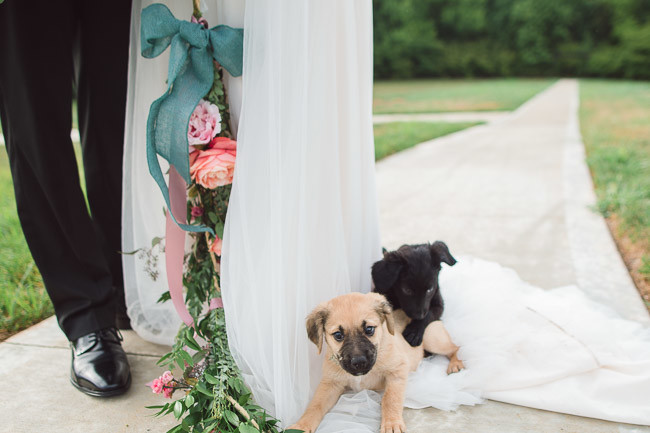The-Farm-At-Woodend-Springs-Unleashed-Pet-Rescue-Wedding-64