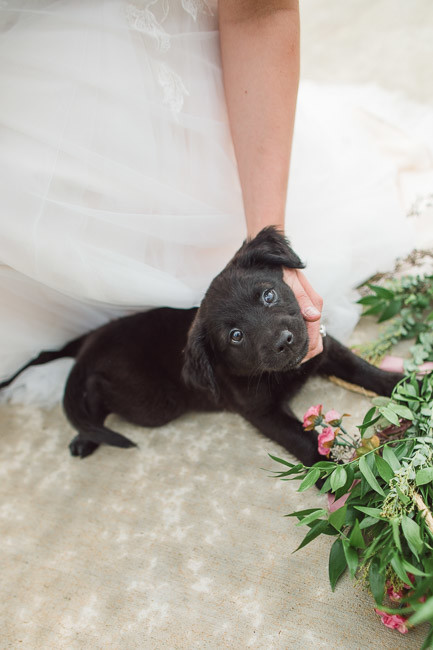 The-Farm-At-Woodend-Springs-Unleashed-Pet-Rescue-Wedding-65
