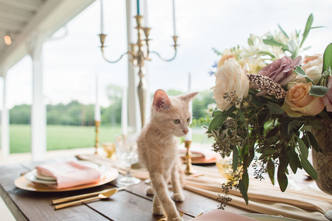 The-Farm-At-Woodend-Springs-Unleashed-Pet-Rescue-Wedding-77