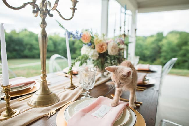 The-Farm-At-Woodend-Springs-Unleashed-Pet-Rescue-Wedding-78