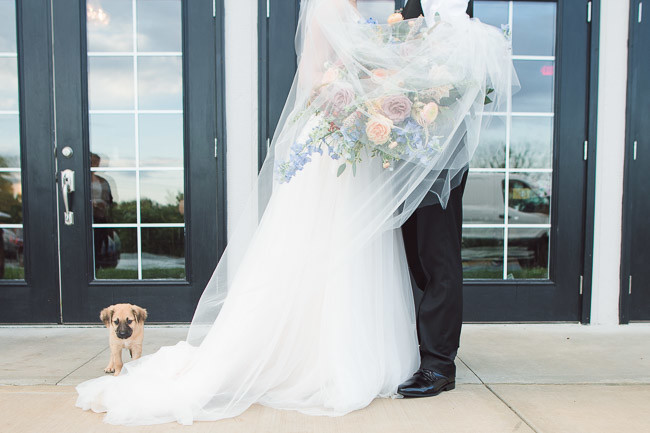 The-Farm-At-Woodend-Springs-Unleashed-Pet-Rescue-Wedding-80