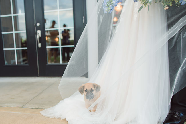 The-Farm-At-Woodend-Springs-Unleashed-Pet-Rescue-Wedding-82