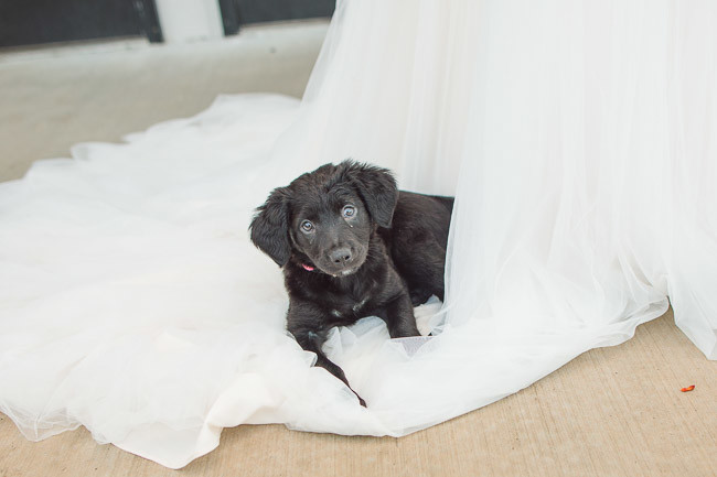 The-Farm-At-Woodend-Springs-Unleashed-Pet-Rescue-Wedding-84