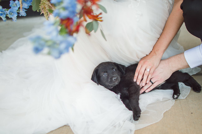 The-Farm-At-Woodend-Springs-Unleashed-Pet-Rescue-Wedding-87