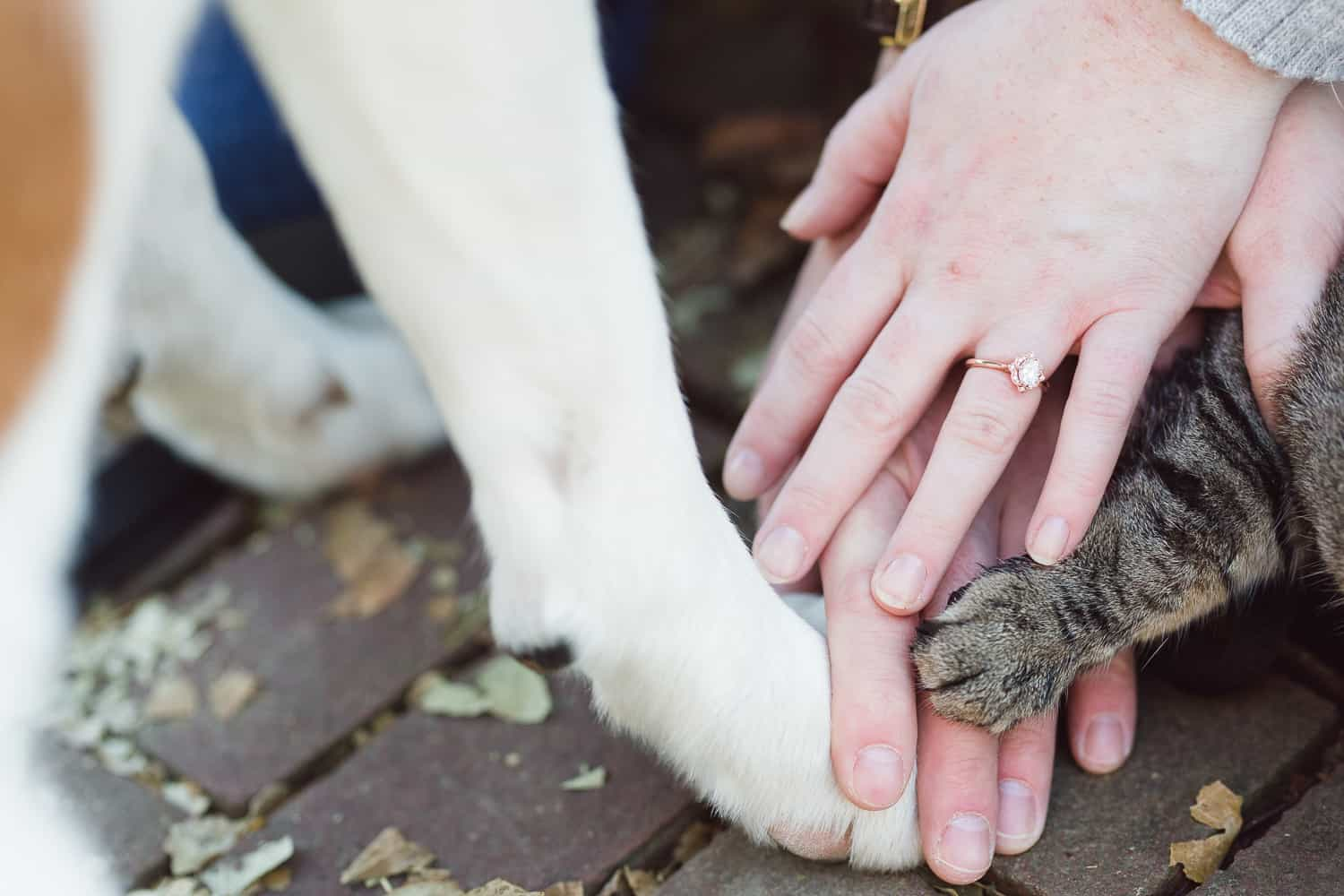 Nelson-Atkins engagement session with pets